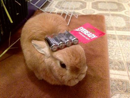 Bunny and Batteries