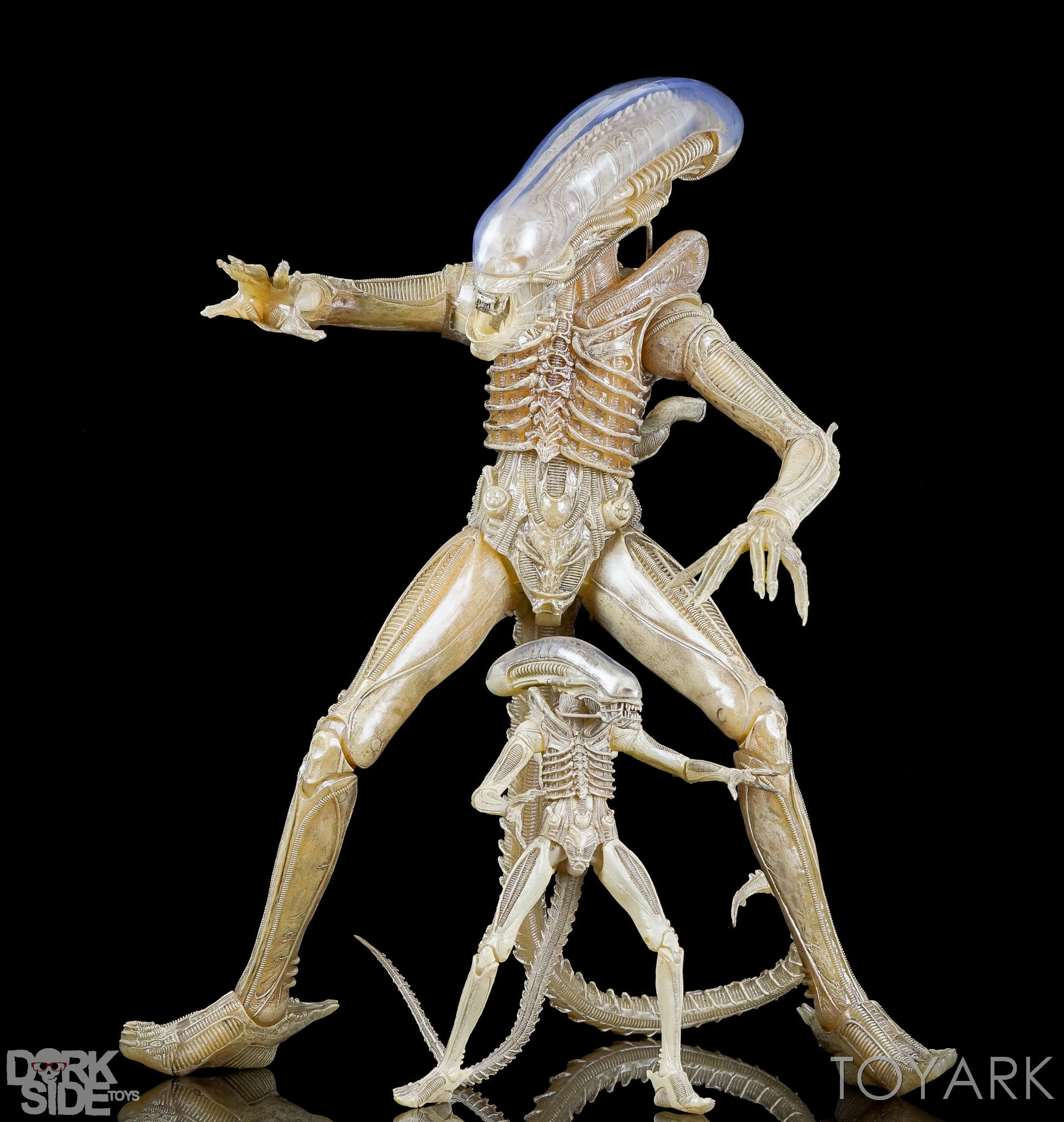 http://news.toyark.com/wp-content/uploads/sites/4/2016/10/NECA-Quarter-Scale-Concept-Alien-047.jpg