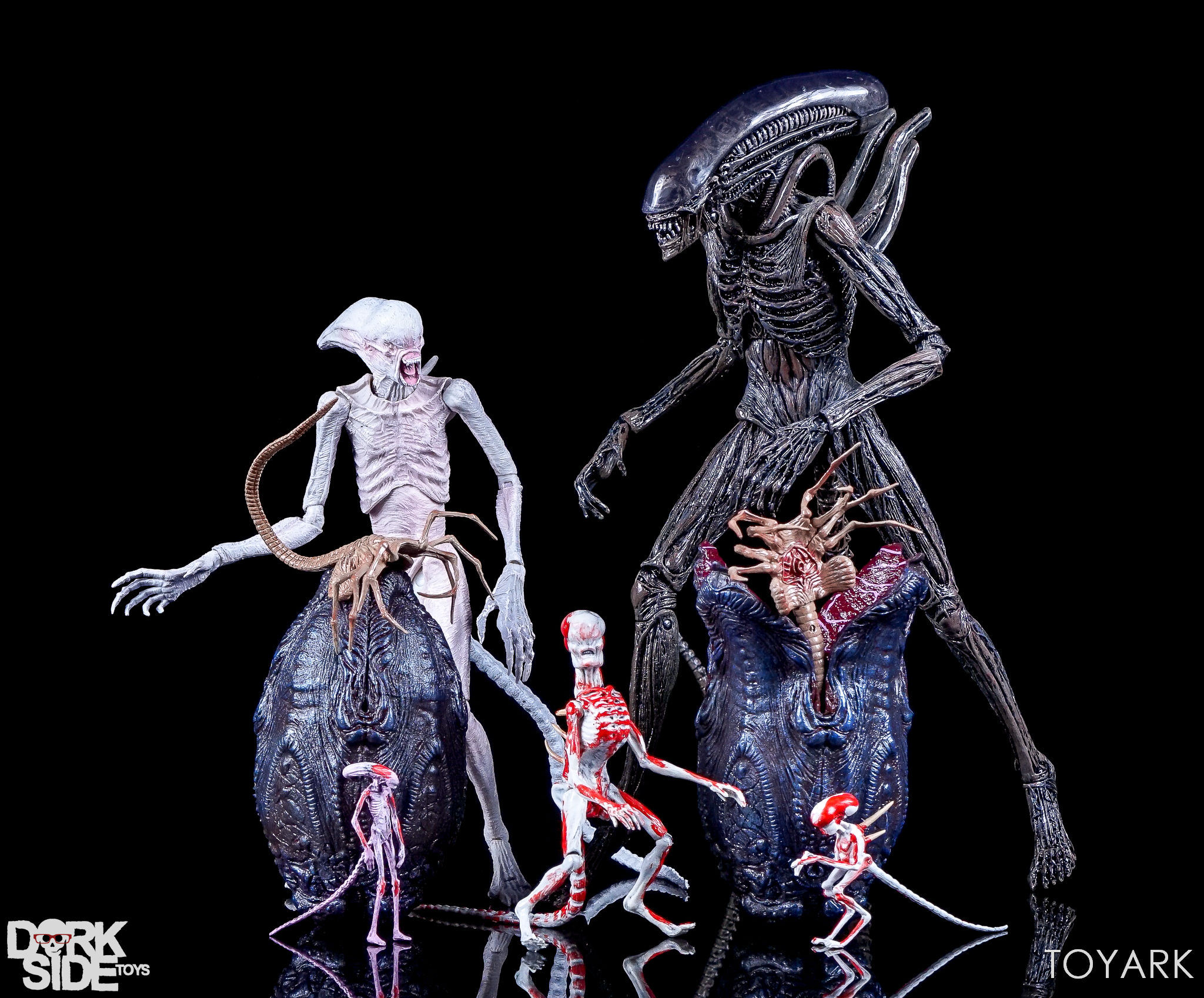 http://news.toyark.com/wp-content/uploads/sites/4/2017/08/NECA-Alien-Covenant-Figures-039.jpg