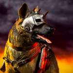 Chronicle Dogmeat Statue 021
