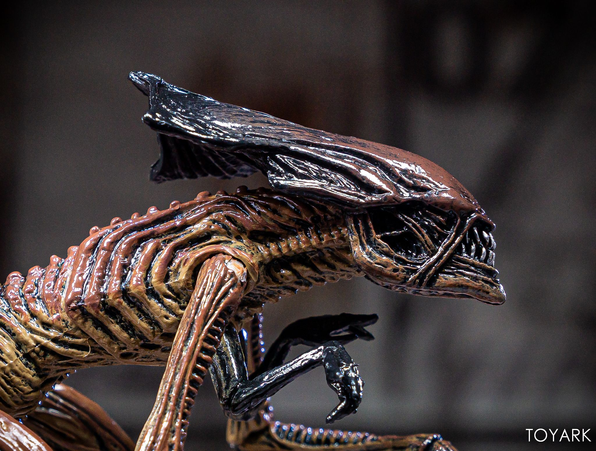 https://news.toyark.com/wp-content/uploads/sites/4/2019/08/Alien-3-Creature-Set-015.jpg