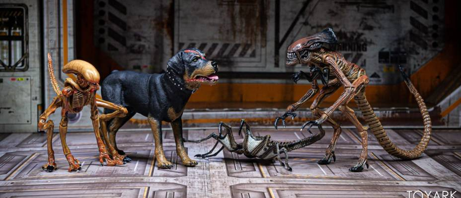 NECA Alien 3 Creature Pack - Toyark Photo Shoot
